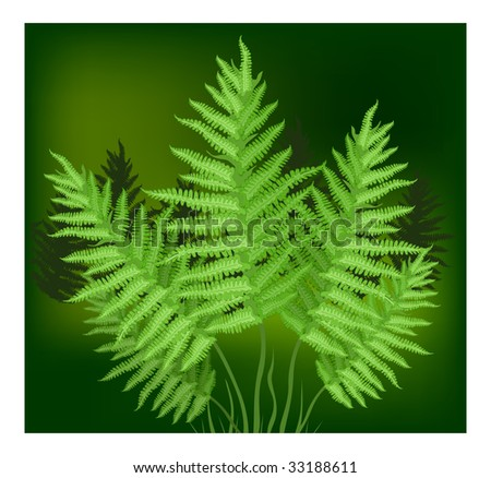 Plant of fern family on green background, vector illustration - stock vector