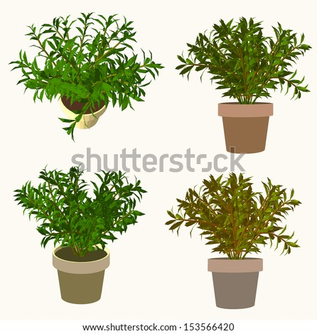 plant on the pot. plant and tree vector series - stock vector