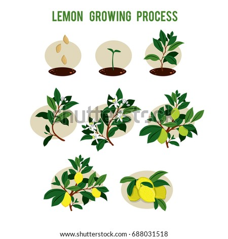 stages of seed germination process pdf
