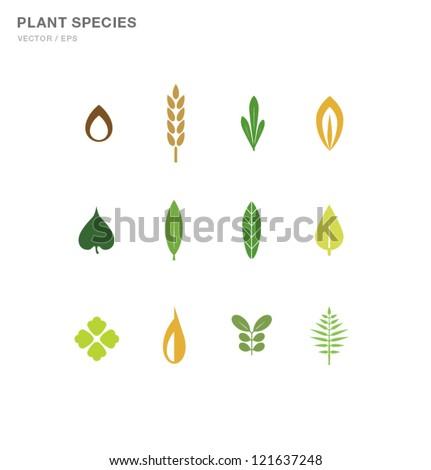 Plant Species Design - stock vector