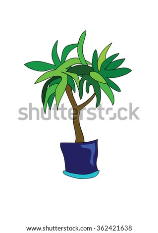 plant with green leaves in blue flowerpot