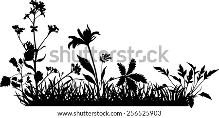 Image Result For Tropical House Plants