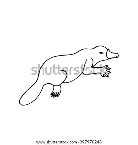 Platypus Australian Animal Linear Hand Drawn Illustration Vector