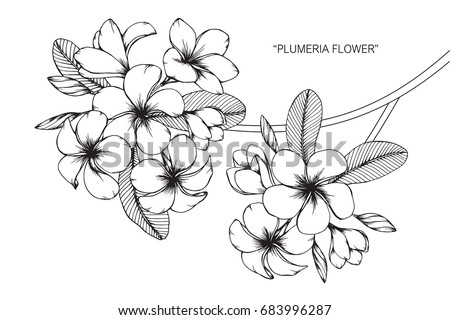 Plumeria Stock Images Royalty Free Images Amp Vectors