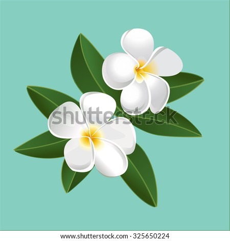 Plumeria. Tropical Flowers Vector Image. - stock vector