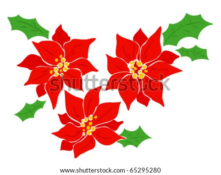 Poinsettia. - stock vector