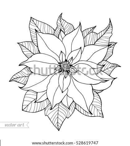 Christmas Flowers Stock Images Royalty Free Images