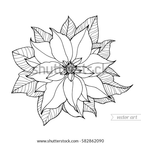 Poinsettia Isolated Christmas Flower Vintage Vector Artwork Black And White Coloring Book