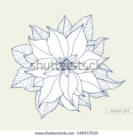 Poinsettia Isolated Christmas Flower Vintage Vector Line Artwork Coloring Book Page For Adult