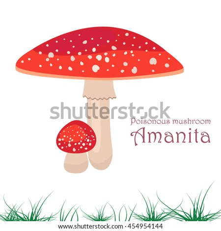 Poisonous Mushroom on a white background. Mushroom Amanita. For your design - stock vector