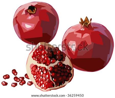Pomegranates - stock vector