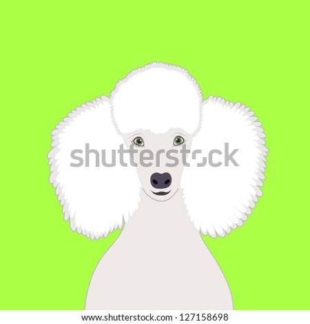 Poodle, The buddy dog - stock vector