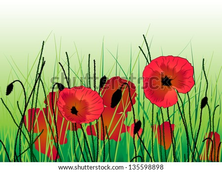 Poppies in the grass. Summer background - stock vector