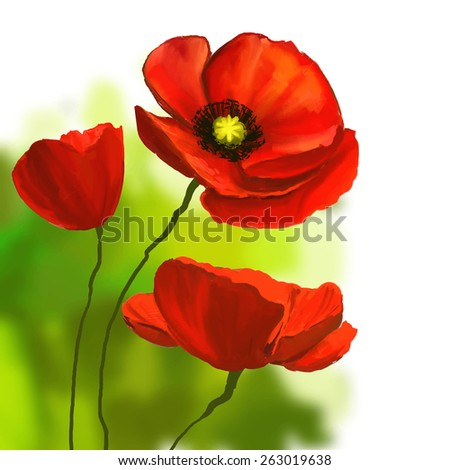 poppies vector illustration  hand drawn  painted watercolor  - stock vector