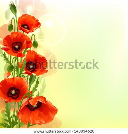 Poppy background. Vector illustration - stock vector