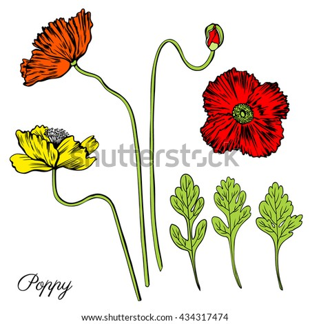 Set Colourful Aquatic Plants Coral Isolated Stock Vector ...