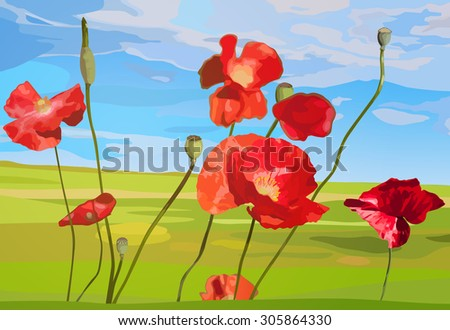 Poppy red flowers on field background.