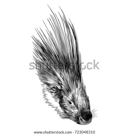 porcupine head sketch vector graphics monochrome black and white drawing