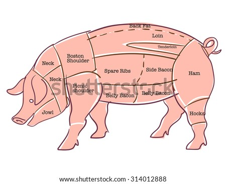 Pork or pig cuts - stock vector