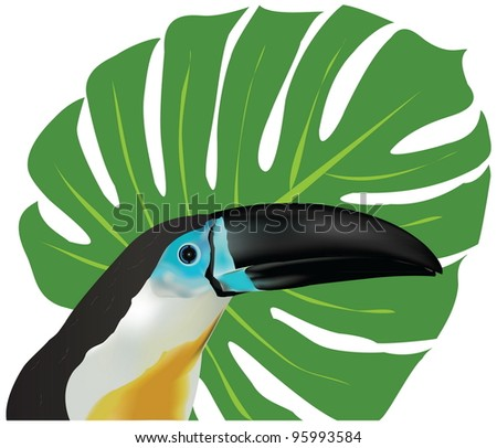 Portrait of a channel-billed Toucan. The vector illustration was created using meshes and gradients. - stock vector