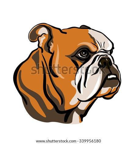 portrait english bulldog vector illustration stock vector