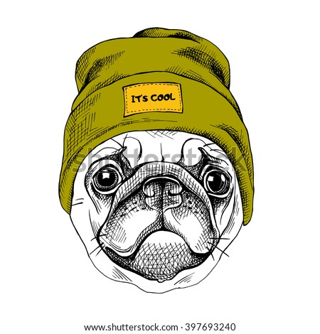 Portrait of the Pug in a hipster hat. Vector illustration. - stock vector
