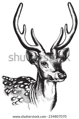 Portrait sketch of a Spotted Deer face. Vector illustration in black and white.    - stock vector