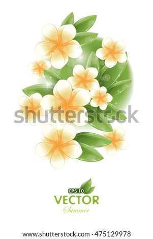 Postcard - White frangipani flowers, vector illustration, eps-10