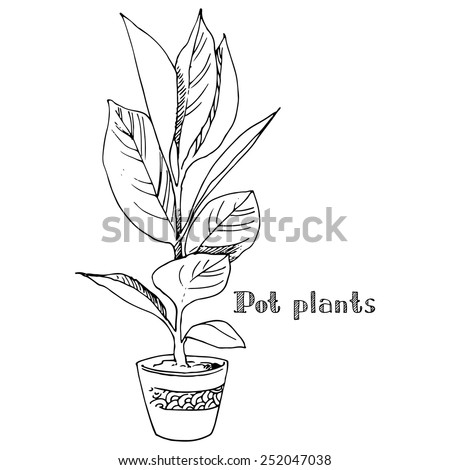 Pot plants, vector illustration potted plant drawn black line on a white background, hand-drawn design element. - stock vector