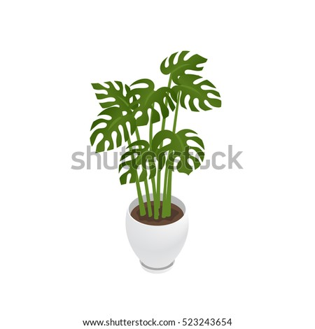 Potted indoor, office and house plant. 3d flower pot with plate. Isometric vector illustration