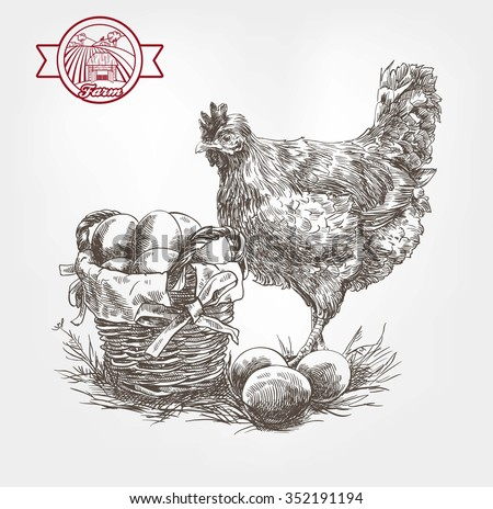 poultry breeding. set of sketches made by hand - stock vector