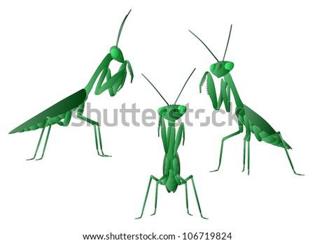Praying Mantis (3 views) - stock vector