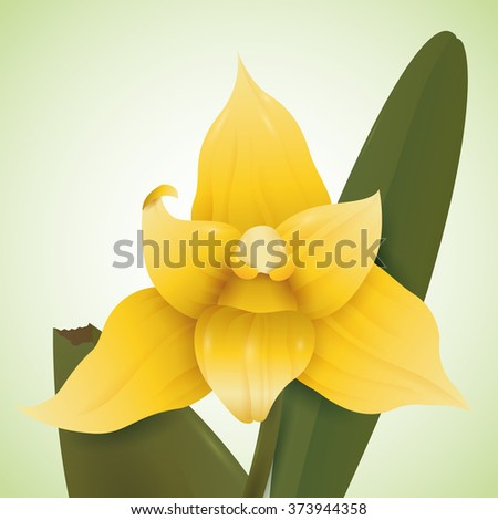 Precious yellow orchid flower in green background. - stock vector