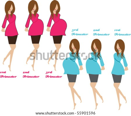 pregnancy stages - stock vector