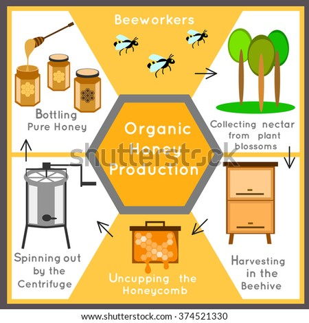 honey industry The honey industry that we know today began to grow sixty years later in philadelphia, lorenzo lorraine langstroth, a minister and teacher, invented a new kind of beehive it was a rectangular wooden box in which he stood a row of frames.