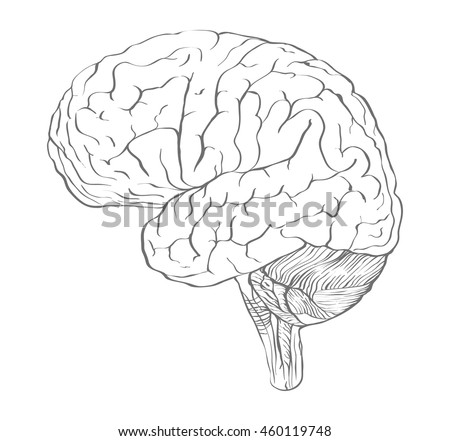 Profile of Brain drawn in outline drawing style as the blank for your work