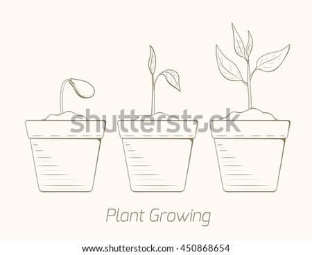 Progression of plant growth cultivation. From seeds to sprouts. Isolated brown outline sketch on beige background.