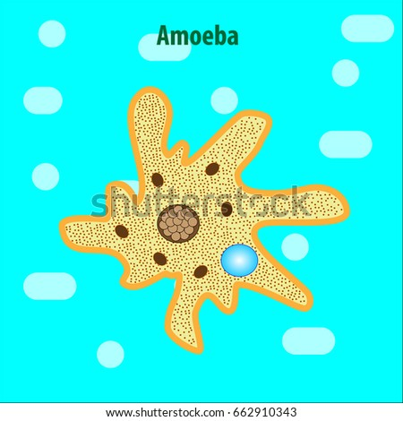 Protozoa Stock Images, Royalty-Free Images & Vectors ...