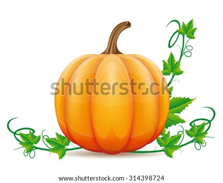 pumpkin and leaf vector illustration isolated on white background - stock vector