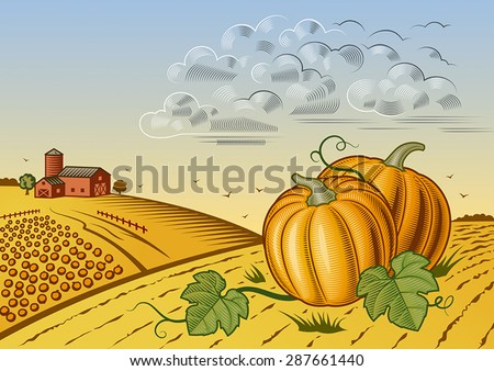 Pumpkin harvest landscape. Editable vector illustration with clipping mask. - stock vector