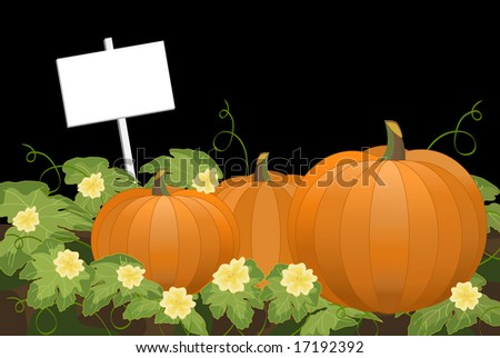Pumpkin patch at night with blank sign. Large detailed leaves and pale yellow flower blossoms with curly vines.