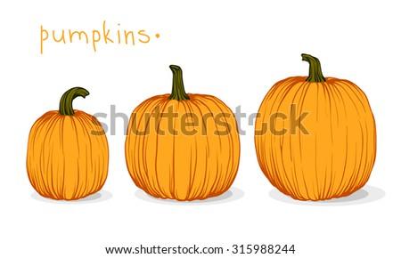 Pumpkin. Vector illustration - stock vector