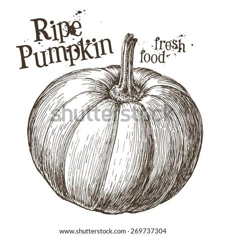 pumpkin vector logo design template. fresh vegetables, food or Halloween icon. - stock vector