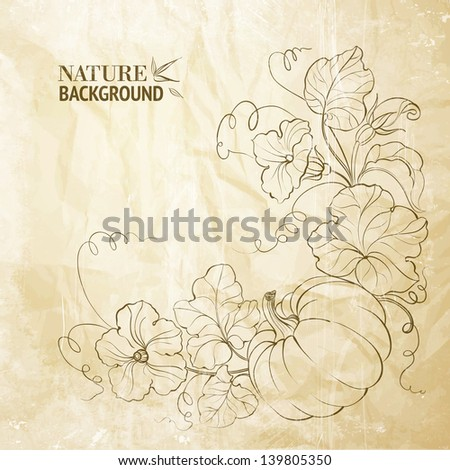 Pumpkin vegetable with leaves on paper. Vector illustration. - stock vector