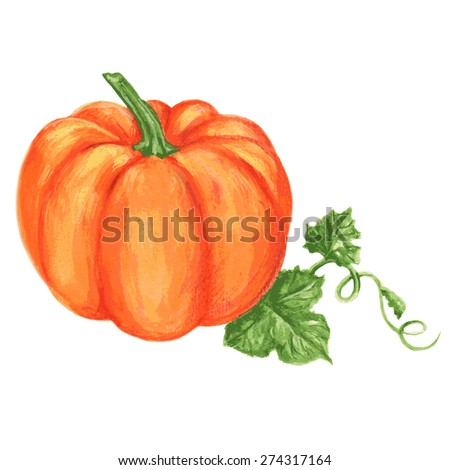 Pumpkin watercolor vector painting illustration isolated on white background, Hand drawn sketch, Design food element, Series of food ingredient for cooking restaurant menu, cafe, symbol autumn holiday - stock vector