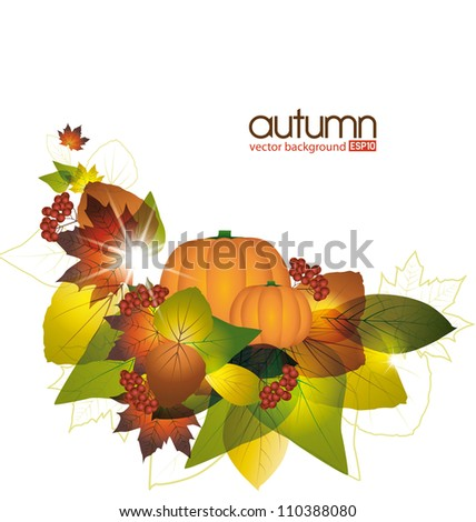 Pumpkins with fall leaves on white background - stock vector