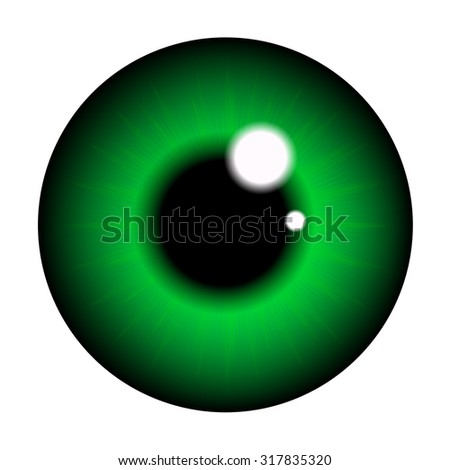 pupil  eye, eyeball. Realistic vector illustration isolated on white background.
