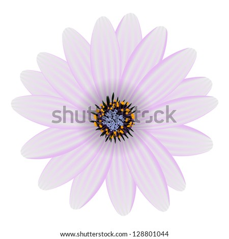 purple flower isolated on white vector illustration