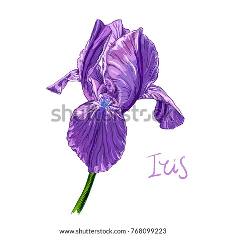 Purple iris flower on white background stock vector 768099223 purple iris flower on a white background hand drawn sketch template design element pronofoot35fo Choice Image