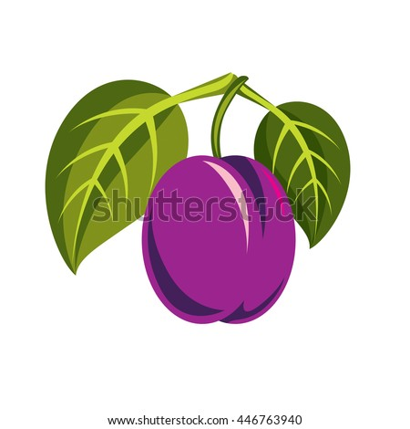 Purple simple vector plum with green leaves, ripe sweet fruits illustration. Healthy and organic food, harvest season symbol.  - stock vector